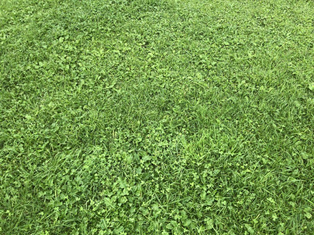 蒜山高原の緑